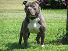 Man (22) uit Nijverdal laat 'onhandelbare' hond achter in bos