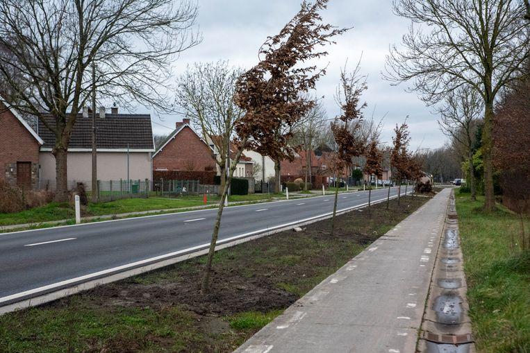 Langs de Heirweg in Laarne worden nieuwe bomen aangeplant.