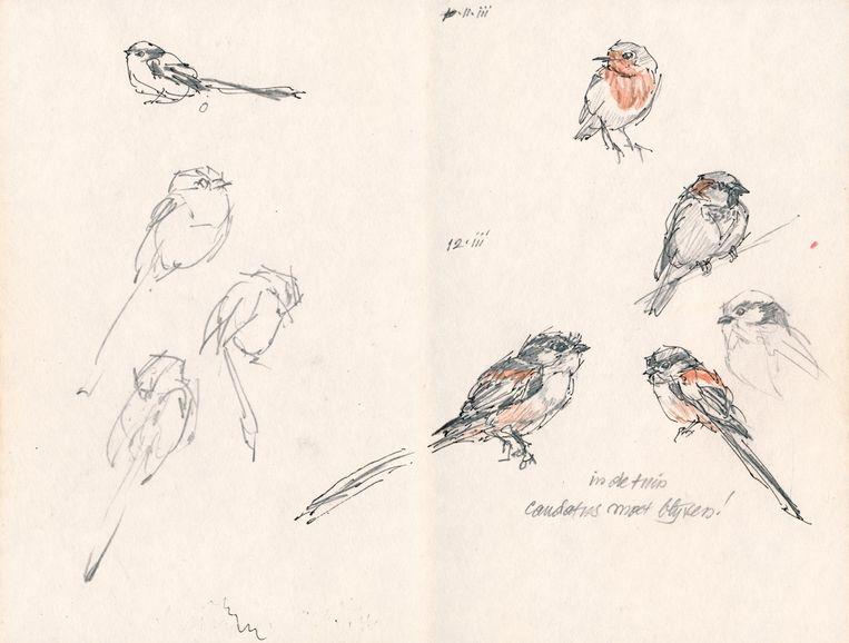 Schetsen en tekeningen uit het Vogeldagboek van Peter Vos. Beeld Peter Vos