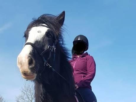 Paard Swiffer dood gevonden; geen misdrijf