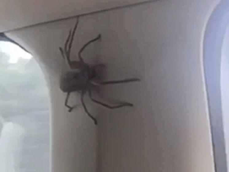 Panique au volant: une énorme araignée dans l'habitacle de leur voiture