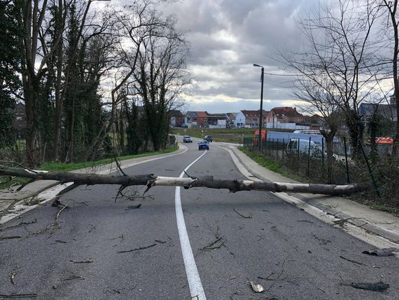 TIELT-Winge-stormschade