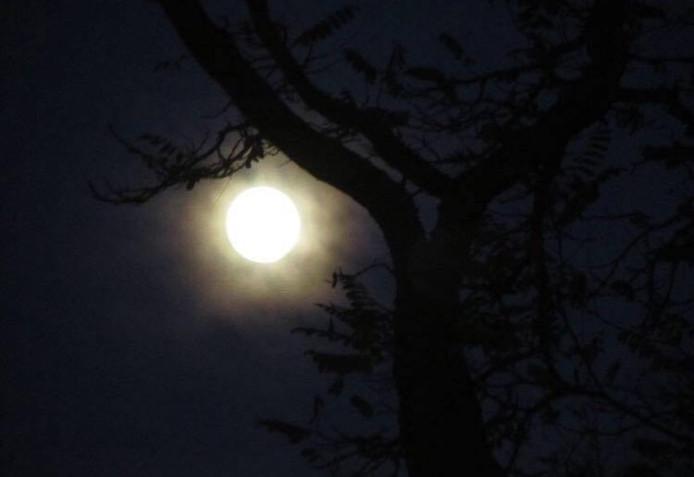 Een heldere nacht met een volle maan, die schijnt door de boom