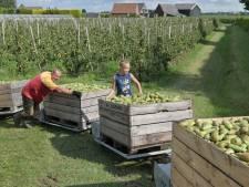 'Overlast van de arbeidsmigranten in Roosendaal sneller aanpakken'