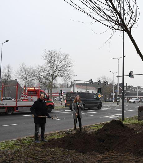 Eerste bomen weer terug op kruising Aartshertogenlaan en Orthenseweg: 'Veel beter dan dat lelijke asfalt'