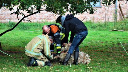 Ook daar zijn brandweermannen voor