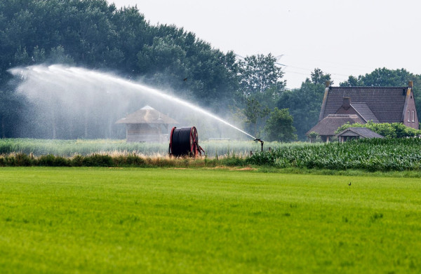 **Voor sommige boeren is de droogte een zegen: prijzen bloemkool en ijsbergsla verdubbeld**