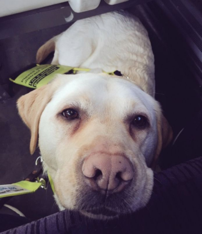 Blindegeleidehond Kika.