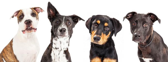 Wat zijn de populairste hondennamen? Website Tinki stelde een top 10 samen.
