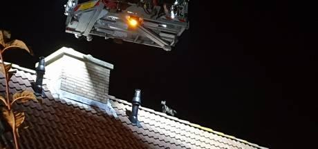 Brandweer rukt uit met hoogwerker voor katje op dak in Waalwijk