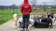 Tolbeekhoeve organiseert goedkope honden- en kattenopvang