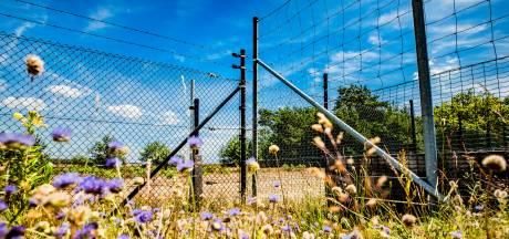 Nieuwe hekken moeten wolf van Hoge Veluwe weren en herten toelaten