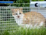 Arnhem geteisterd door kattenontvoerder