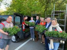 Brugge hangt straks vol met 40.000 geraniums: bewoners krijgen gratis bloemetjes van stad