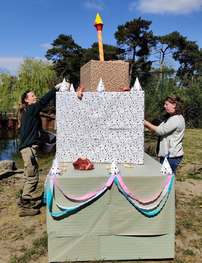Tijgerdrieling viert eerste verjaardag in Safaripark Beekse Bergen.