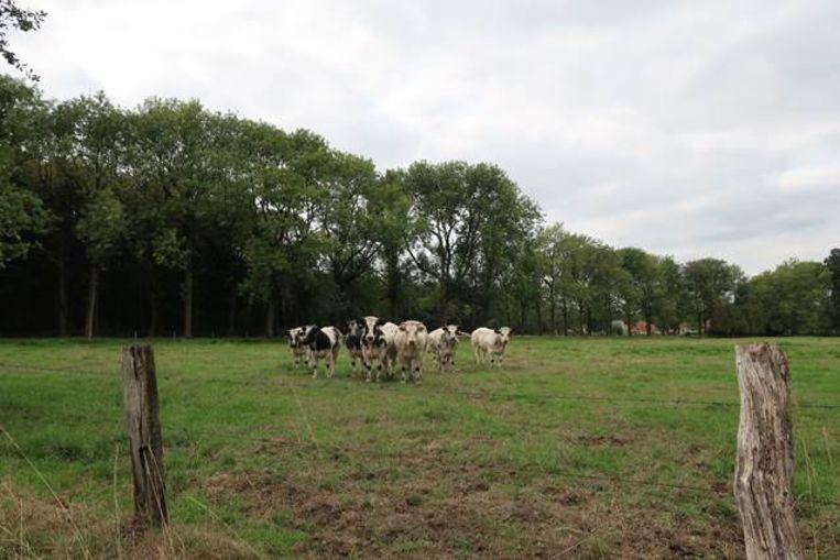 De Merel in Brecht is een domein van in totaal 160 hectare.