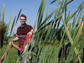Natte teelt als goede vervanger van grassen