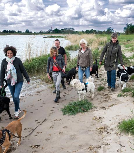 Hondenbezitters en omwonenden mogen meedenken over inrichting recreatieterrein Salmsteke