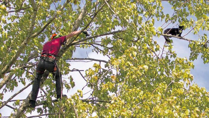 Hoe dichter Jorn Stuij bij Snuitje kwam, hoe verder de kat naar het uiteinde van een tak liep. De boomverzorger zaagde de tak af, waarna Snuitje met een plons in het water belandde