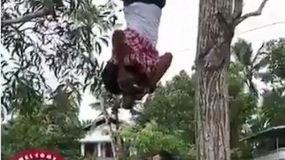Trouwfotograaf hangt ondersteboven in boom om het perfecte plaatje te schieten