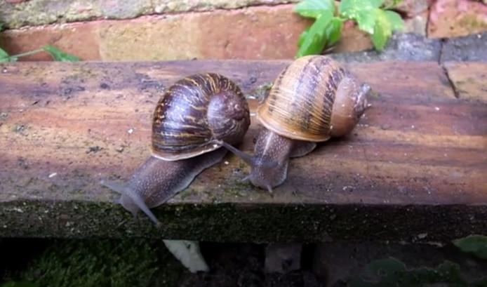 Jeremy en zijn ex-vriendin Lefty die hem in de steek liet voor een nieuwe liefde.