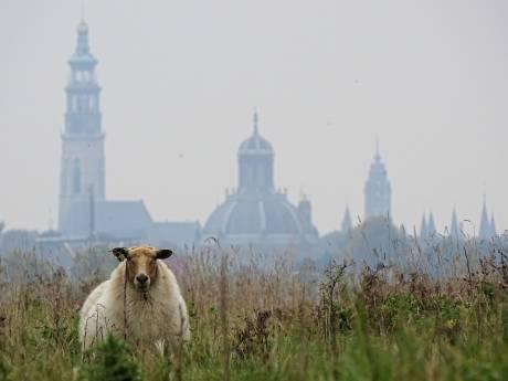 Bewoners Zwanenhof vrezen nieuwbouw: 'Straks geen zicht meer op unieke Middelburgse skyline'