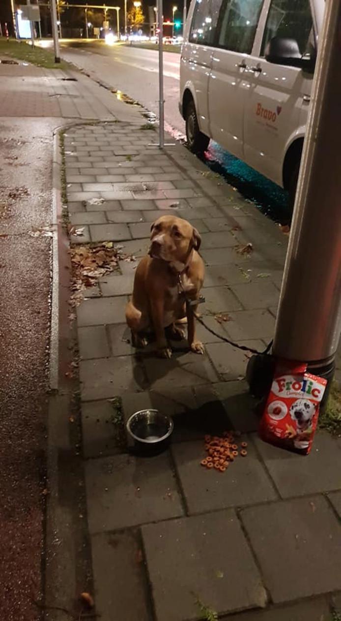 Jongen belt aan in de buurt om zijn hond weg te geven, maar laat haar aan paal achter