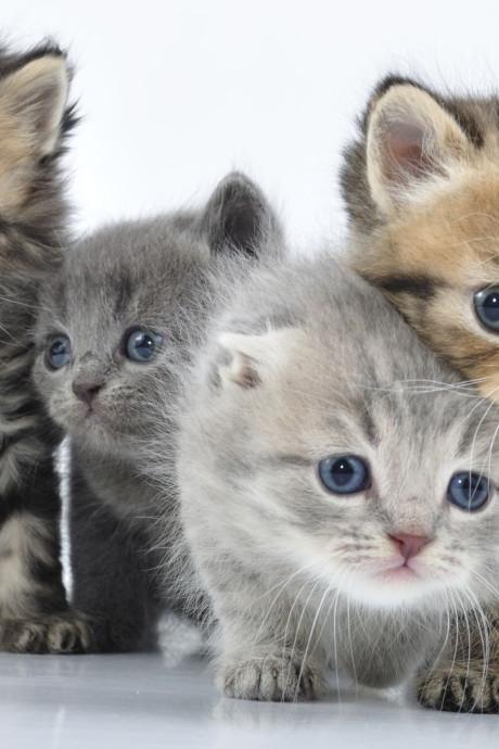 Westervoort bemoeit zich niet met kattenoverlast, maar geeft wel tips
