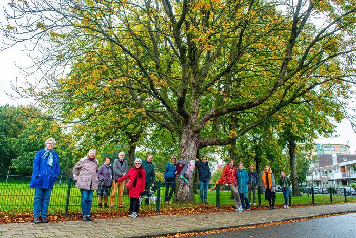 Bewoners Rivierenbuurt in Amersfoort voeren actie voor het behoud van een monumentale kastanjeboom.