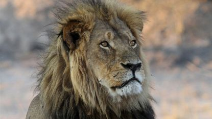 Adviesraad wildbescherming VS zit vol met jagers en wapenlobbyisten