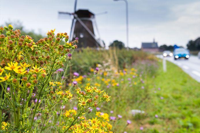 Bloemen en kruiden in de berm ter hoogte van Windesheim op de provinciale weg van Zwolle naar Wijhe.