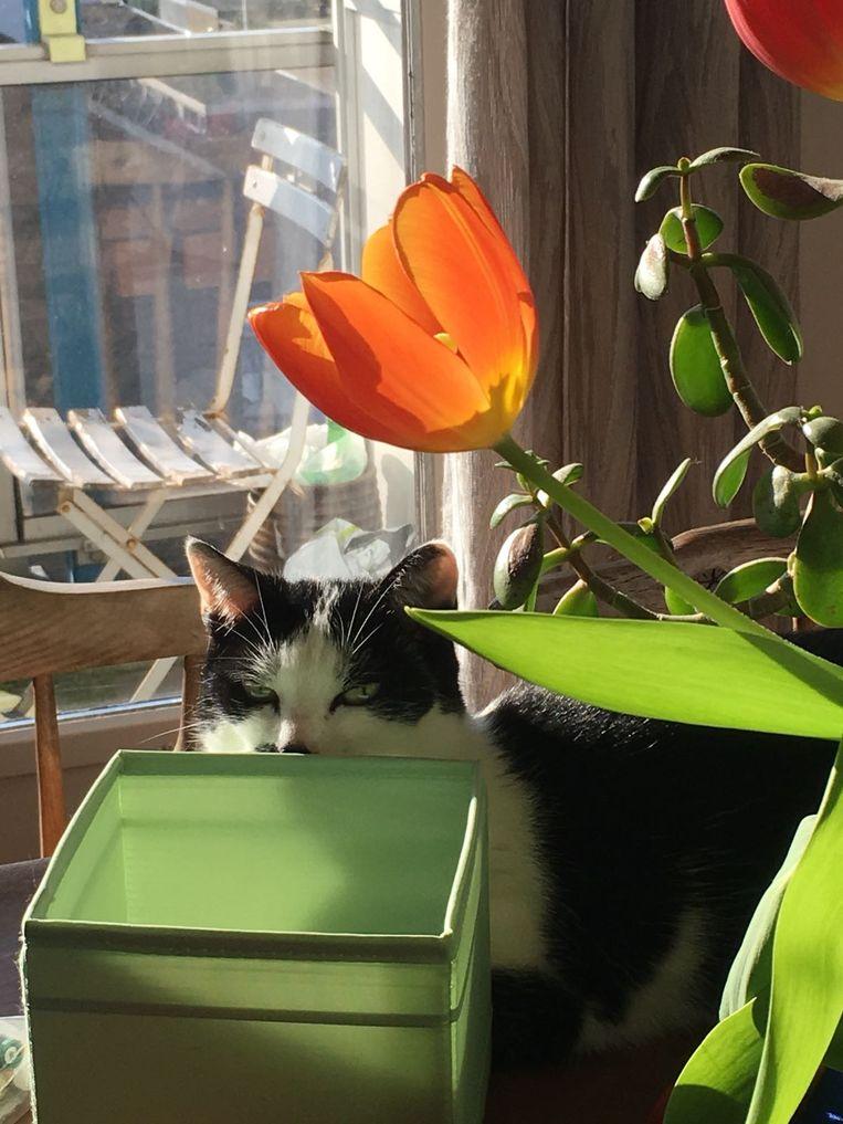 Glitter, de kat van oprichter Job Beeld