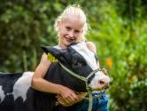 Doortje 48 helpt Muriëlle uit Noordijk aan eerste prijs: 'Koeien bemoeien zich nergens mee'