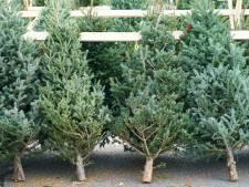 Hoe vind je een betaalbare, populaire of duurzame kerstboom?