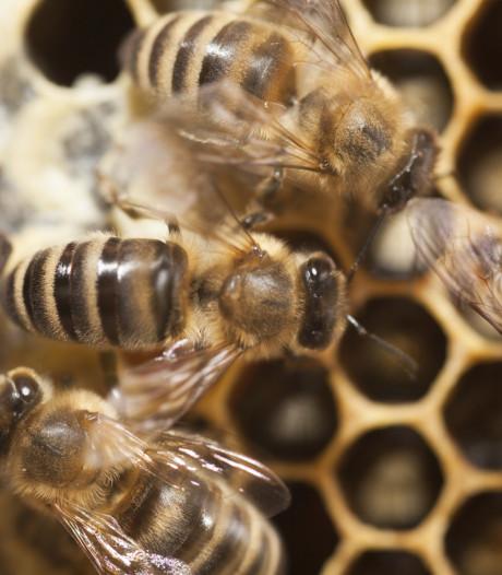 'Hulst moet meer rekening houden met bijen'