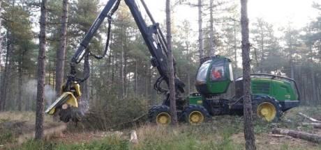 Bos bij Best wordt 'uitgedund', bomen met een oranje stip gaan tegen de vlakte