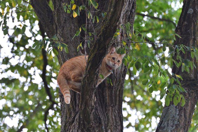De bange poes vluchtte aan de Pottenbakkerstraat in Breda een boom in.