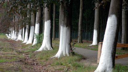 Omgevallen bomen en nog hevige wind in aantocht: Weertsedreef tot maandag afgesloten