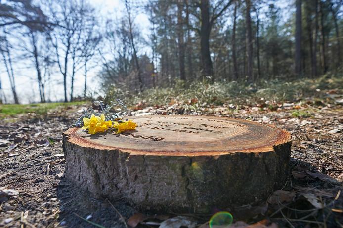 Natuurbegraafplaats de Maashorst bij Schaijk: geen zerk maar een boomschijf met de naam van de overledene.