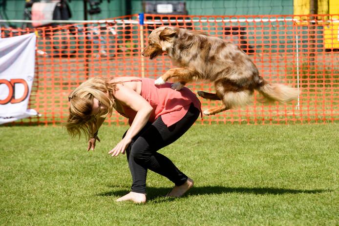 VALKENSWAARD - Dogdance