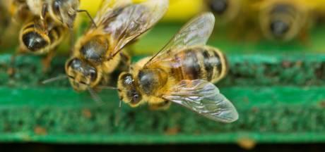 Dodelijk slachtoffer (69) bijenaanval Tanzania woonde in Schiedam: 'Hij is honderden keren gestoken'
