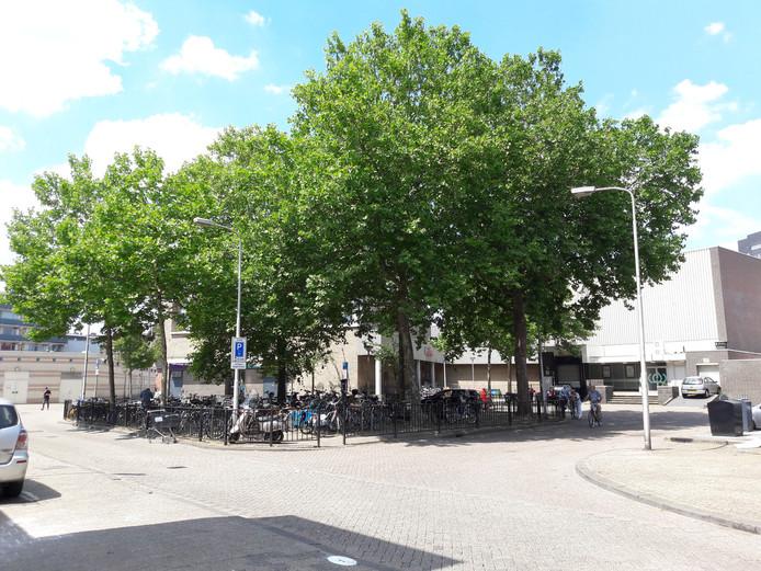 De bomen op het Hendrikhof worden gekapt.