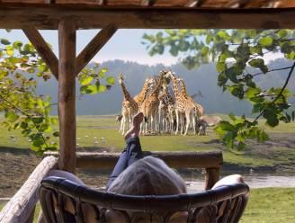 Wakker worden tussen de zebra's en neushoorns, het kan in 2018 bij de Beekse Bergen