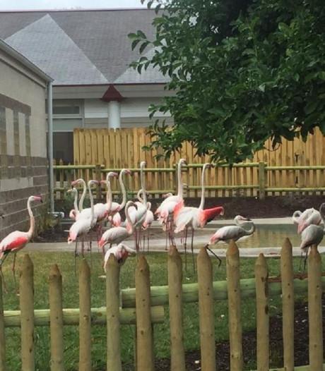 Zoo moet flamingo laten inslapen na incident met stenengooiende scholier