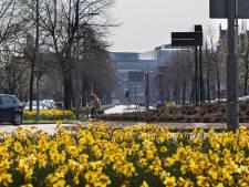 Terwijl de buurt blijft klagen, stelt gemeente Den Bosch dat Koningsweg al die bussen best aan kan