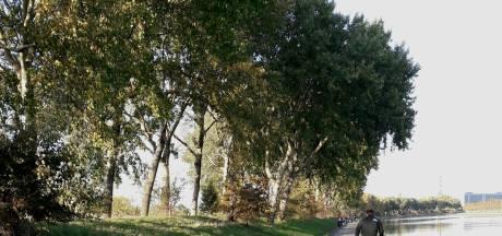 Zeeuwse bomen nog zo groen als gras, en dat is best bijzonder