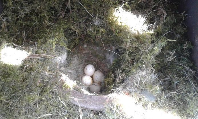 Vier eitjes liggen in de emmer van de waterpomp