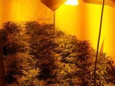 Politie rolt wietkwekerij op met honderden planten