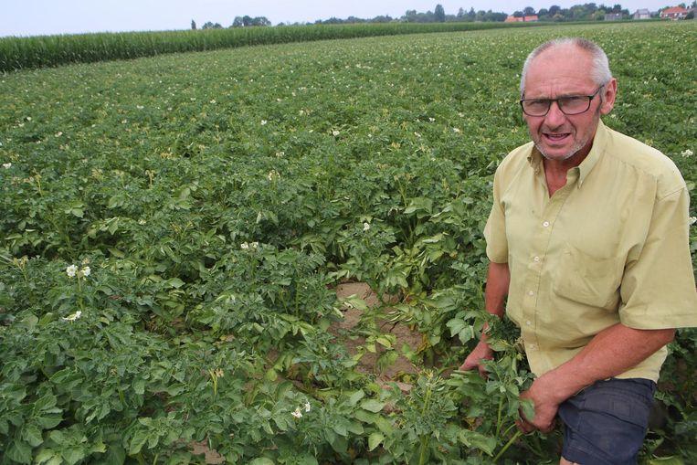 Tuur Dumont uit Hakendover bij zijn aardappelen, die dringend regen nodig hebben.