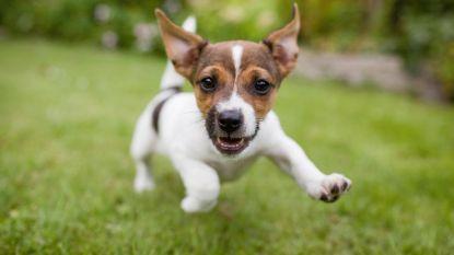Nieuwe hondenspeelweide komt aan domein de Ghellinck